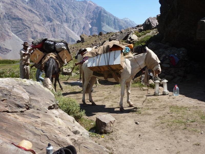 mules loaded on a camping trip on horseback