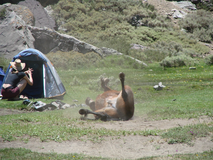 camping in the Andes - horse rolling